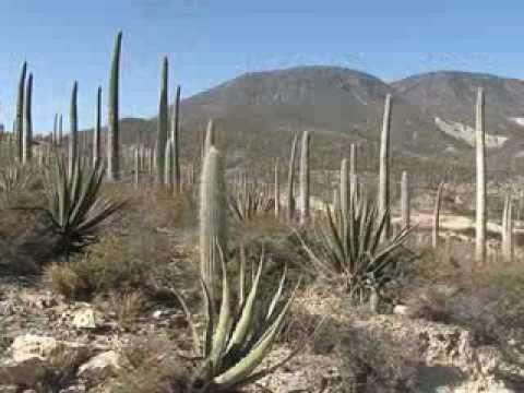 Reserva de la biósfera Tehuacán-Cuicatlán. Área natural protegida.