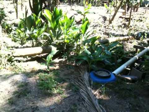L'impianto di fitodepurazione degli alloggi nella riserva del Sebui
