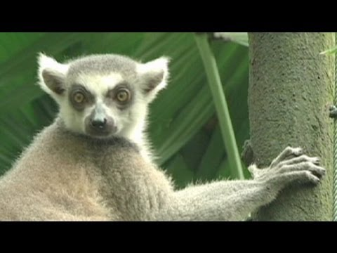 euronews learning world - Talk and walk and learn with the animals