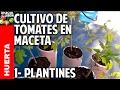 Cultivo de Tomate Parte 1 - Como plantar tomates espectaculares en casa paso a paso