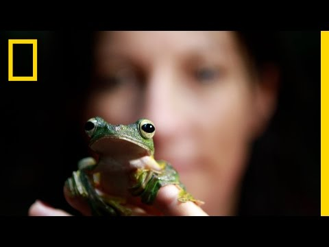 National Geographic Live! - Lucy Cooke: Saving the Creeps