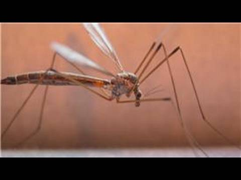 Mosquito Information : What Are the Effect of Mosquitoes in Humans Life?