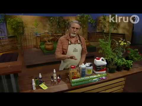 John Dromgoole mosquitoes: Central Texas Gardener