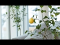 How To Regrow Fruit From Your Kitchen
