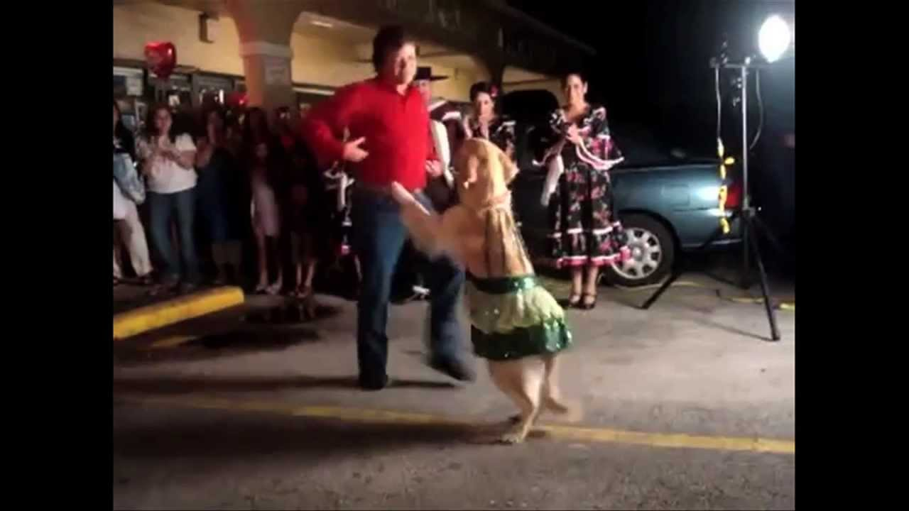 18 ANIMALS THAT CAN PROBABLY DANCE BETTER THAN YOU