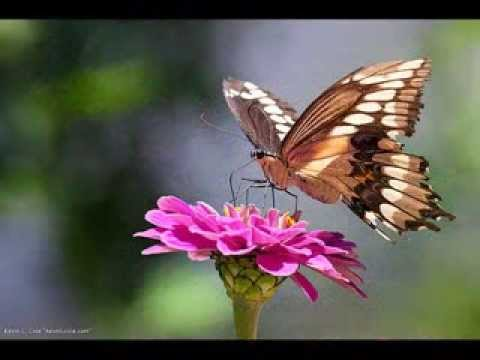 Butterflies are the Most Beautiful Insects in the World