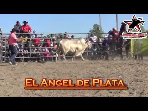 !ANGEL de PLATA vs CHONTA DE HUITZUCO! (1080p HD)
