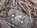 Фрагмент с конца видео Случайная находка.Настоящий клад из гнезда сороки камрада.