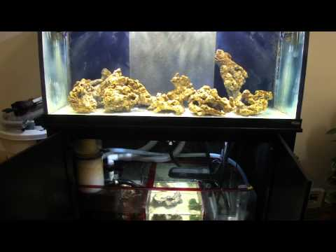 How To Cycle A Reef Aquarium