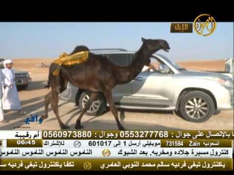 الطايلة بكرة محمد بن ناصر نتيفان الحارثي