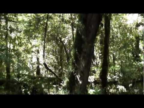 Don Gabriel enseña nombres de árboles del bosque nativo chileno
