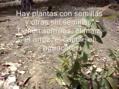 Clasificacion del reino vegetal.wmv