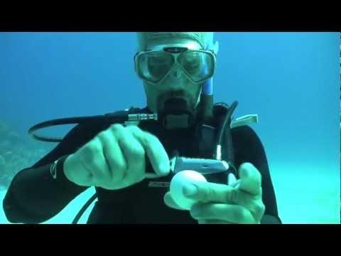 شاهد ماذا يحدث عندما نقوم بكسر بيضة تحت الماء