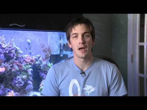 Controlling Nitrates in a Saltwater Aquarium