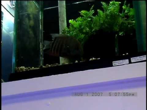 Videoclip #2 - Fish Bowl Pet Shop, Stamford, CT - Hero Severon