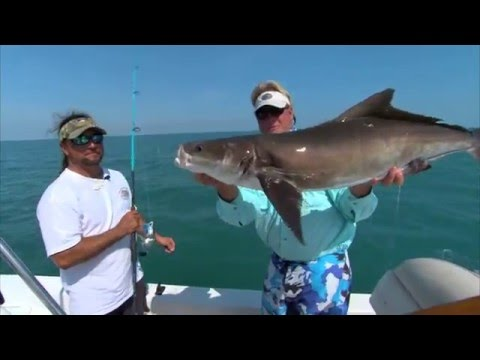 Cocoa Beach Cobia (NEW SHOW) - Beach fishing  May 5, 2011