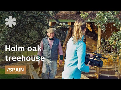Local-materials treehouse built on old oak, leaves it intact
