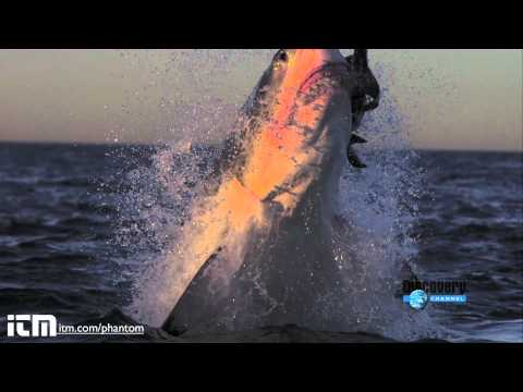 Slow Motion Shark Attack High Definition