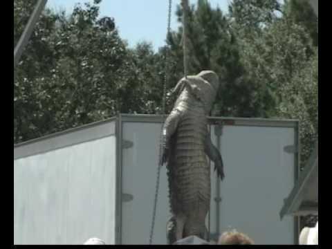 Anahuac - Texas Gatorfest