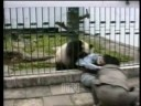 Panda Attacks Tourist