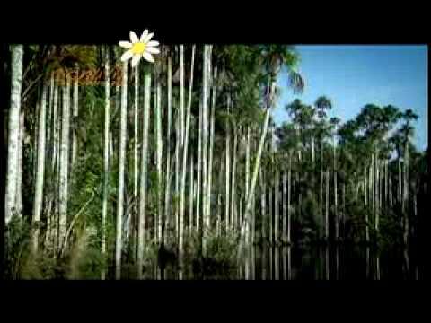 REP08-Vender carbono para conservar el bosque