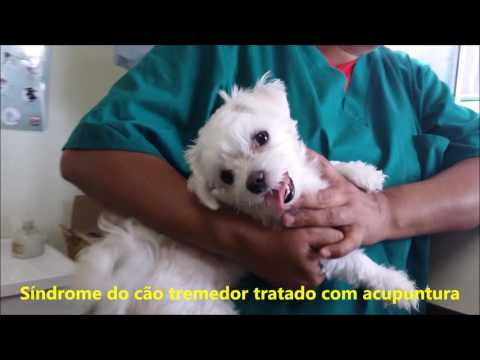 Sindrome do Cão Tremedor