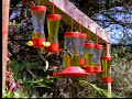 Humming birds - David Attenborough  - BBC wildlife