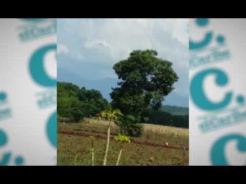"""Grupos de haitianos se observan este miércoles atravesando los montes  por la comunidad """"Los Arroyos"""" de  este municipio fronterizo. El gobierno dominicano decidió extenderle el plazo por un año más para que regularicen su estatus."""