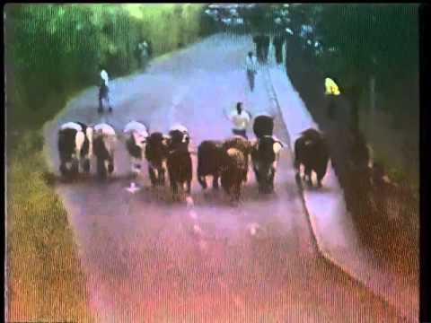 San Fermin Pamplona del dia 11 7 1984 encierrillo Marques de Domecq 480p