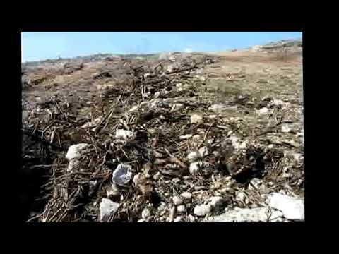 Masacre Ambiental en Guayanilla Windmar Enemigo del Ambiente Mayo 2012