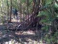 Photo Penangkapan Perkosaan Di Hutan