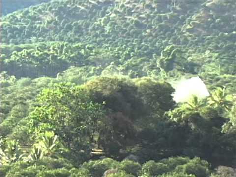Foto ayahuasca y sus virtudes