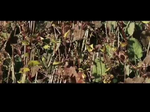 Agroforestazione: piantare gli alberi dentro le colture. Lingua francese, sottotitoli in italiano