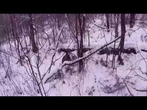 Закрытие сезона охоты в приморье часть 1 изюбр с загона.