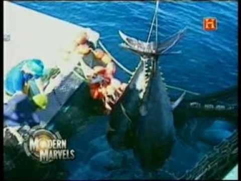 Maravilhas Modernas: A Pesca Comercial