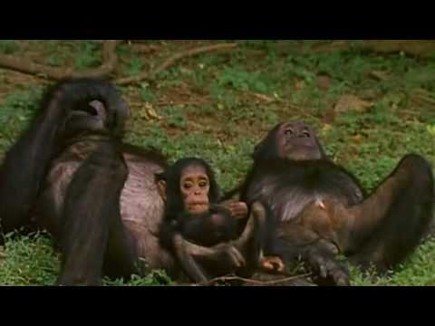 Natural World - Bringing Up Baby (2009) (Part 6/6)
