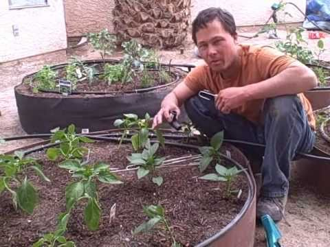 Raised Bed Vegetable Garden Install from Start to Finish