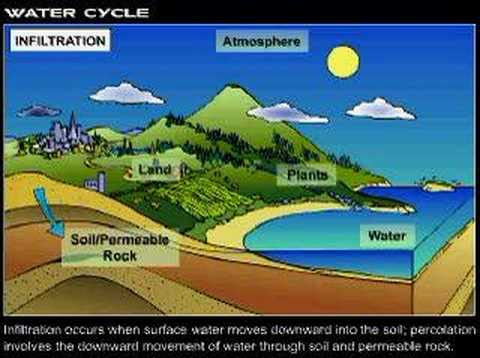 The Earth's Water Cycle - Environmental Science