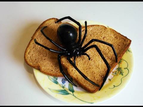 Giant Black Widow Spider