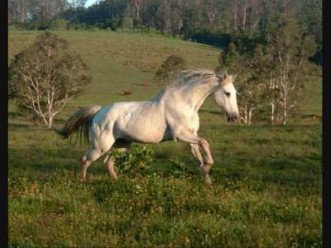 Leonard Cohen - Ballad of the absent mare.wmv