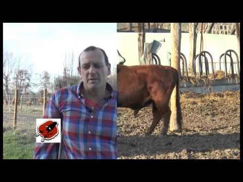 VIDEO CLIP PUBLICIDAD 2015 DIA 4 ABRIL 2015