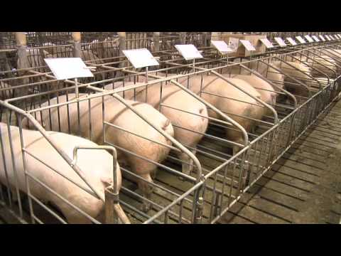 Close-up on Farm Animal Welfare Part 3
