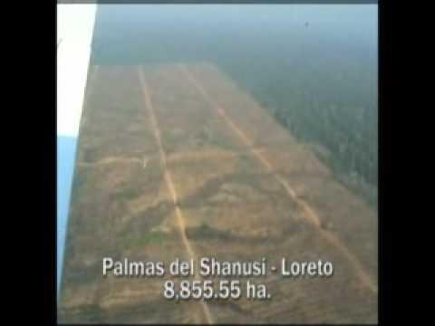 Grupo Romero arrasa bosques amazónicos y desplaza a indígenas