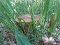 Сбор белых грибов от 17.06.2017 Удачная тихая охота!!!