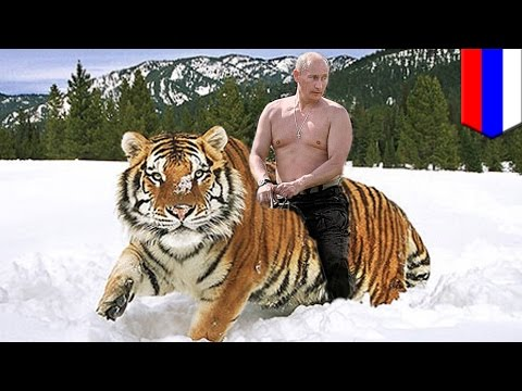 Vladimir Putin's Siberian tigers have crossed into China and are eating Chinese goats