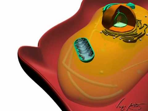 vmd - 3d animation - biology