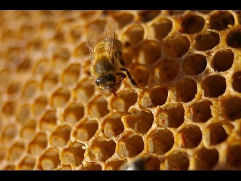 بالفيديو : أقوى ريجيم عسل بالقرفة على الاطلاق