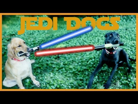 JEDI DOGS