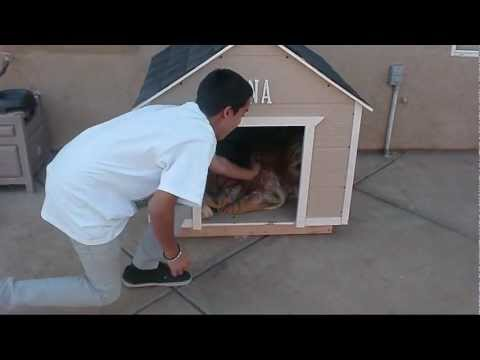 How to build a large Dog House.