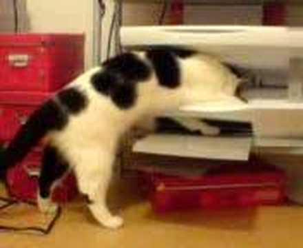kittens hiss